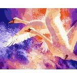 Swan allegiance