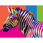 Coloreful Zebra